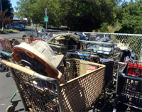 collecting shopping carts